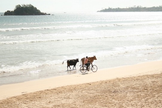 Sri Lanka - Weligama -