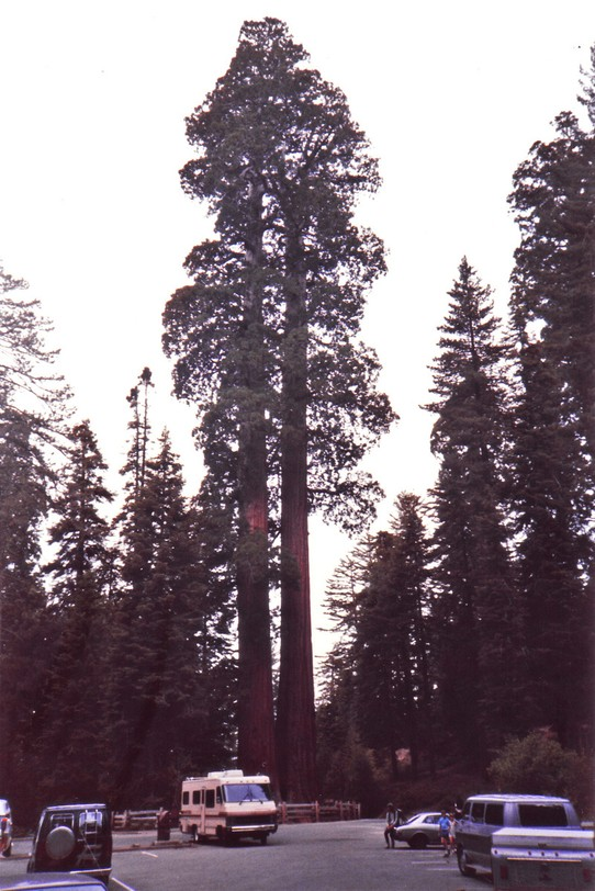 United States - Sequoia National Park - General Sherman Tree