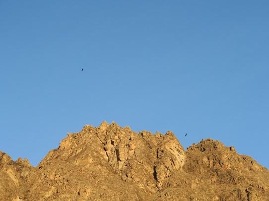 Peru - Cabanaconde District - Les stars du coin, les condors au coucher du soleil !