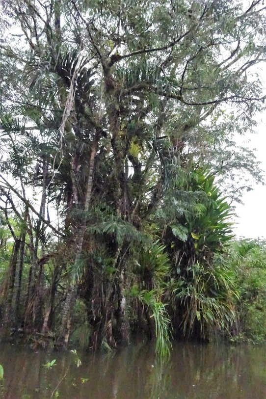 Ecuador - unbekannt - The trees here support so much other life