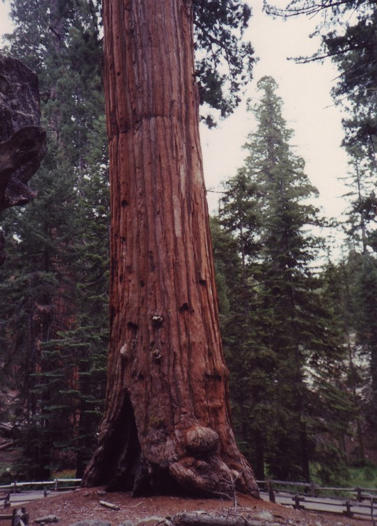 United States - Sequoia National Park -