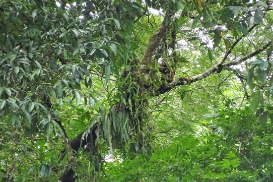 Ecuador - unbekannt - One tree can support over 30 other species